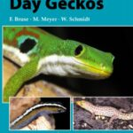 day geckos professional breeders series